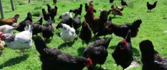 Как это не печально - домашние животные и птица могут являться источником болезни