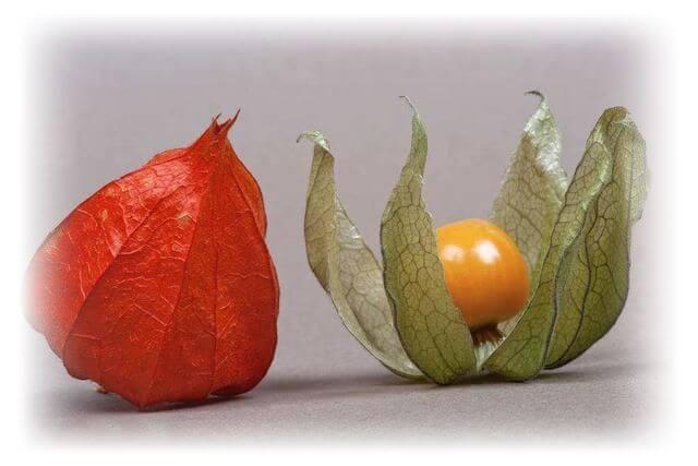 Физалис овощной