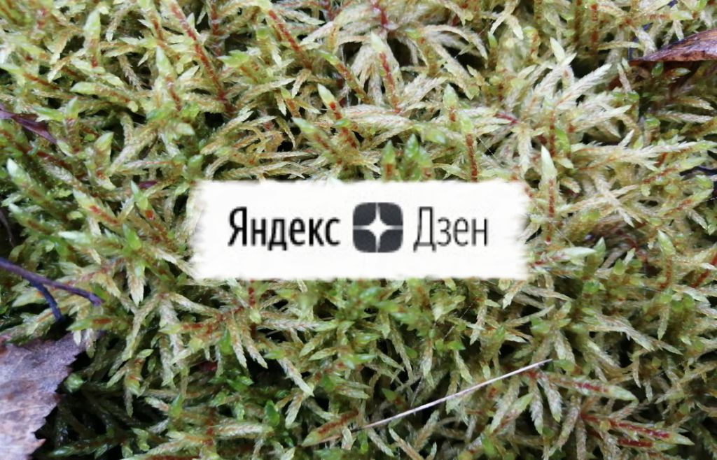 дочитывания в ЯндексДзен